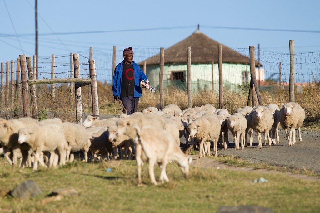 Madiba's People #4